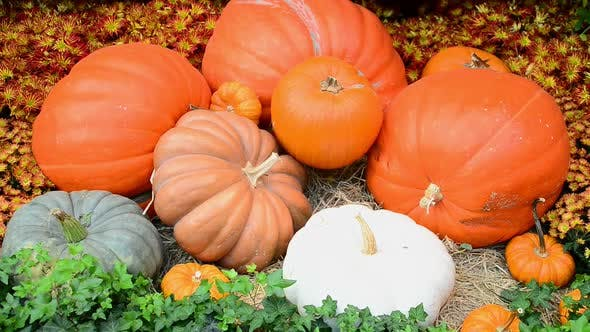 Thumbnail for Cornucopia Of Fall Holiday Items 3