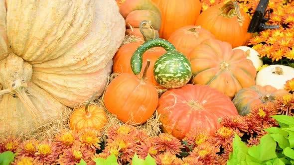 Thumbnail for Cornucopia Of Fall Holiday Items 5