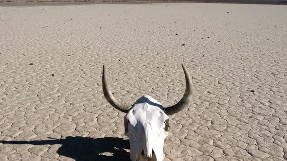 Thumbnail for Skull On The Desert Floor - Death Valley 1