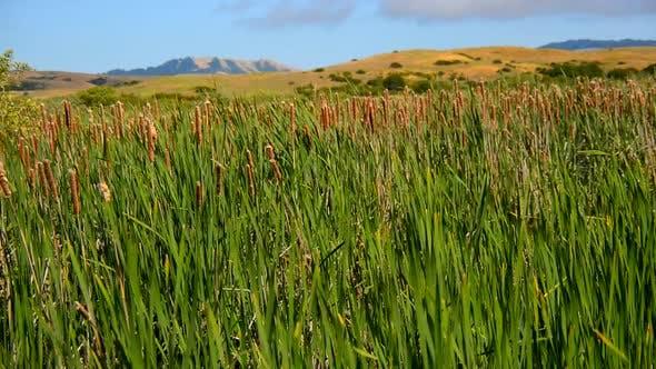 Thumbnail for Marsh Of Reeds Point Reyes California 5