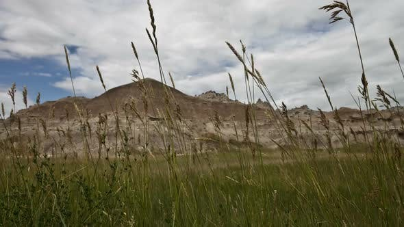 Badlands National Park Grass