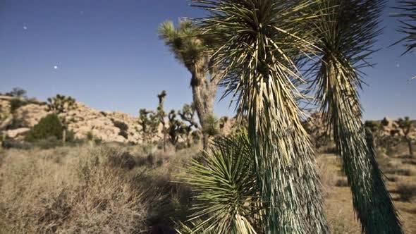 Thumbnail for Yucca Tree At Night