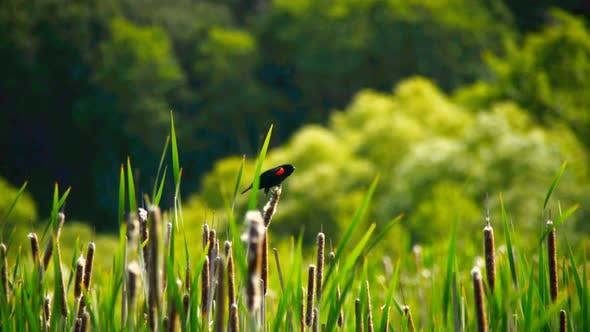Thumbnail for Bird On Reeds Point Reyes California 1