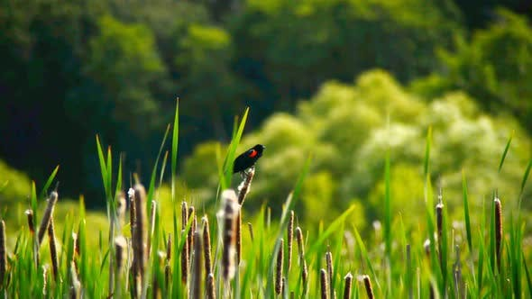 Cover Image for Bird On Reeds Point Reyes California 2