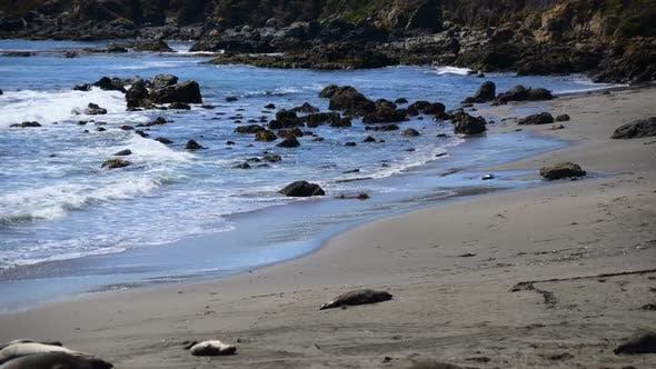 Thumbnail for Elephant Seal Beach -  San Simeon California 2