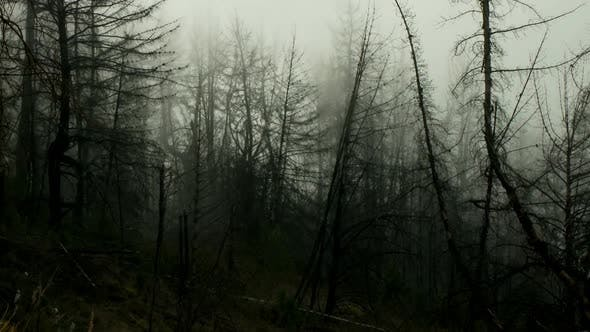 Clouds, Mountains And Trees - Clip 1
