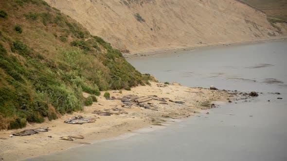 Thumbnail for Elephant Seals At Point Reyes California 2