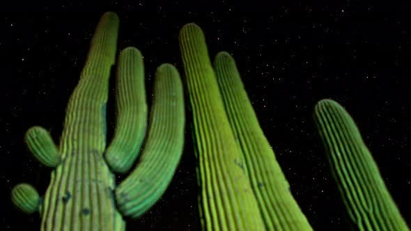 Cover Image for Desert Cactus At Night 1