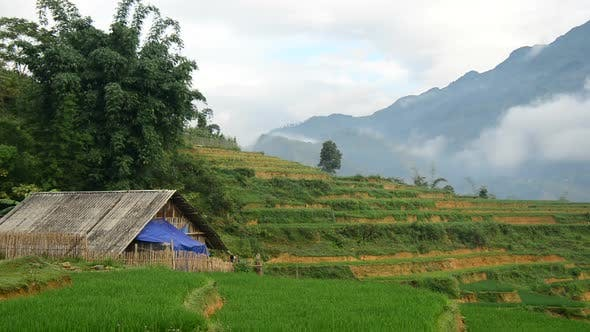 Thumbnail for Farm House Surrounded By Rice Terraces In Valley -  Sapa Vietnam 2