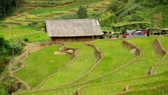 Thumbnail for Farm House Surrounded By Rice Terraces In Valley -  Sapa Vietnam 3