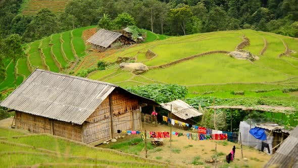 Thumbnail for Farm House Surrounded By Rice Terraces In Valley -  Sapa Vietnam 4