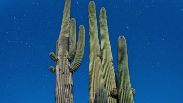 Thumbnail for Night Desert Cactus With Star 1