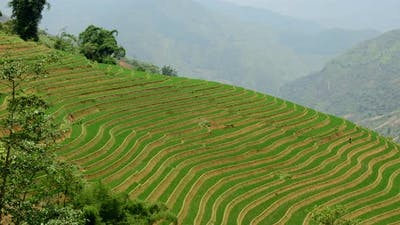 Scenic Rice Terraces In The Northern Mountains Of Vietnam -  Sapa Vietnam