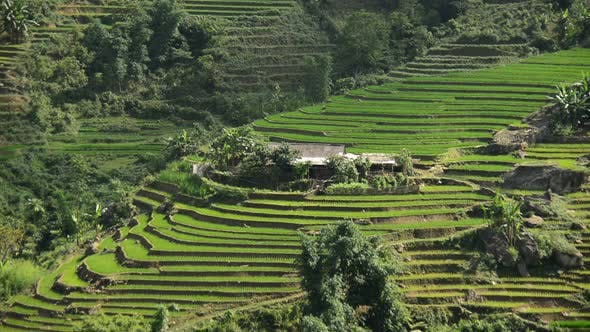 Thumbnail for Scenic Rice Terraces In The Northern Mountains Sapa Vietnam 1