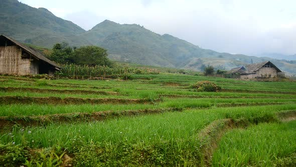 Thumbnail for View Of  Farm With Rice Terraces In Valley Sapa Vietnam
