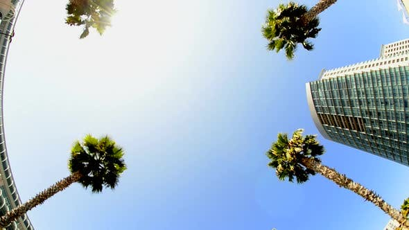 Thumbnail for California Tropical Palm Trees Driving 1