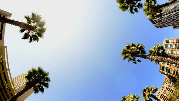 Thumbnail for California Tropical Palm Trees Driving 2