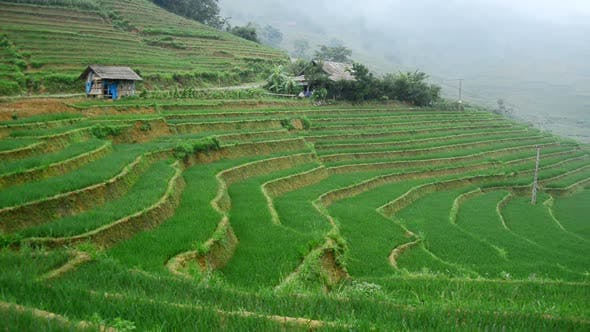 Farm House With Rice Terraces In Valley -  Sapa Vietnam 1