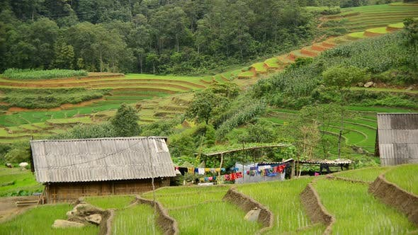 Cover Image for Farm House With Rice Terraces In Valley -  Sapa Vietnam 14