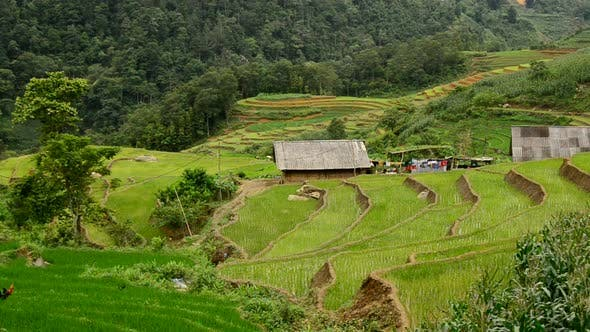 Thumbnail for Farm House With Rice Terraces In Valley -  Sapa Vietnam 16