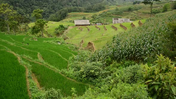 Thumbnail for Farm House With Rice Terraces In Valley -  Sapa Vietnam 17