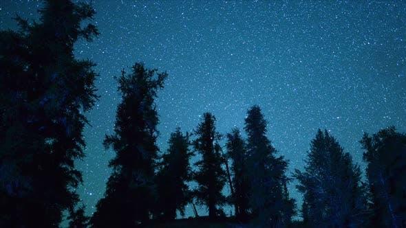 Thumbnail for Ancient Bristlecone Trees At Night
