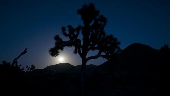 Thumbnail for Joshua Tree At Moonrise.