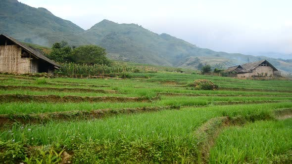 Thumbnail for Farm With Rice Terraces In Valley Sapa Vietnam