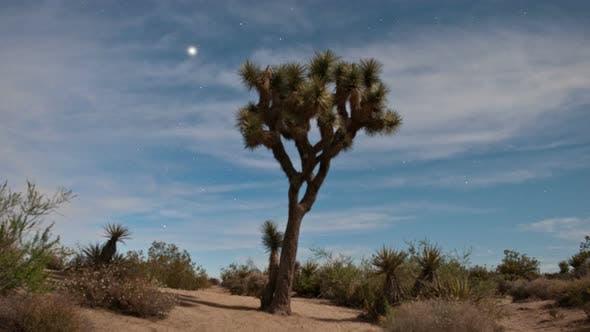 Thumbnail for Joshua Tree In The Desert
