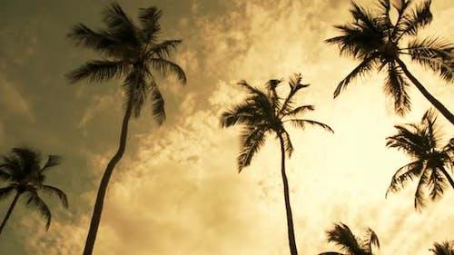 Windswept Palms Trees