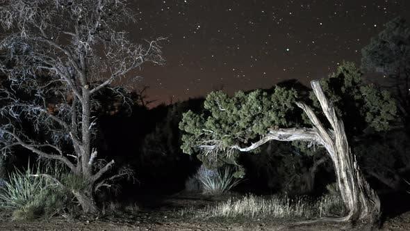 Thumbnail for Stars In The Mojave Desert