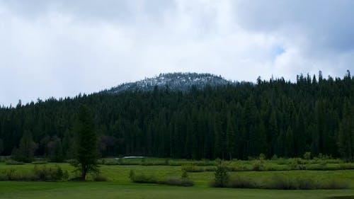 Yosemite Wald
