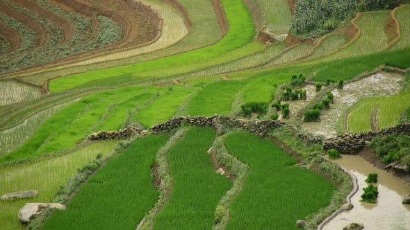Thumbnail for Scenic Rice Terraces - Northern Mountains Sapa Vietnam 1