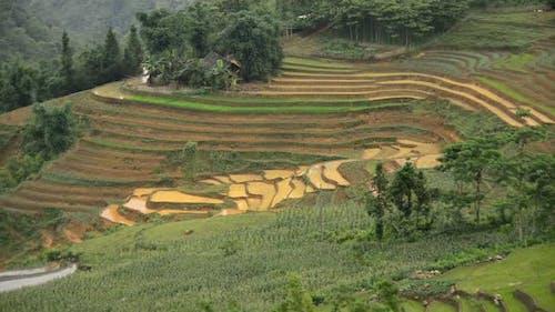 Scenic Rice Terraces In Northern Vietnam -  Sapa Vietnam 1