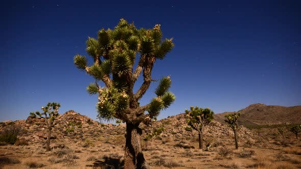 Cover Image for Joshua Tree At Night Full Moon - Time Lapse - Dolly Pan - 4k 2