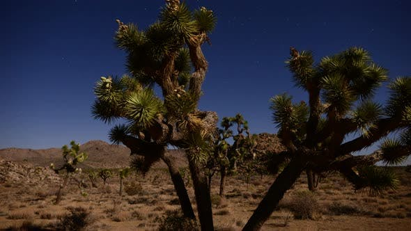 Thumbnail for Joshua Tree At Night Full Moon - Time Lapse - Dolly Pan - 4k 3
