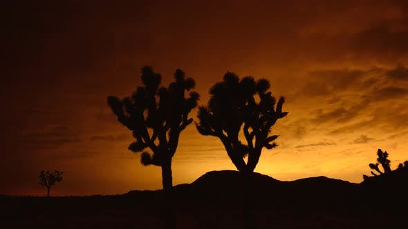 Thumbnail for Time Lapse Of Joshua Trees At Night 1