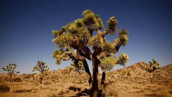 Thumbnail for Joshua Tree At Night Full Moon - Time Lapse - Slider Pan 10