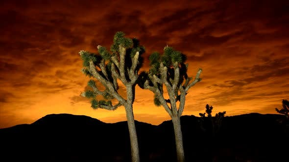 Thumbnail for Time Lapse Of Joshua Trees At Night 4
