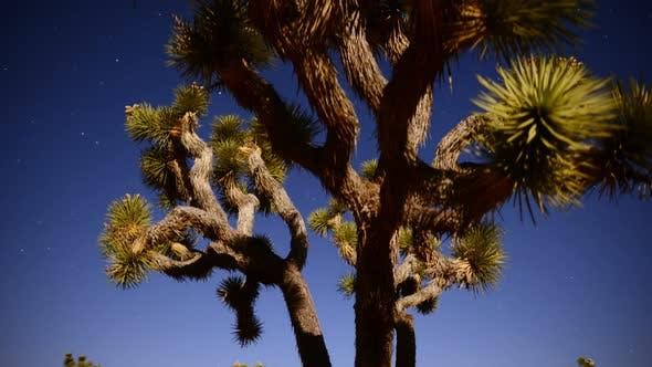 Thumbnail for Joshua Tree At Night Full Moon - Time Lapse - Slider Pan 20