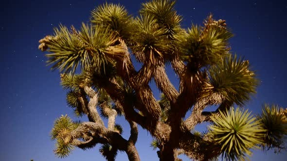 Cover Image for Joshua Tree At Night Full Moon - Time Lapse - Slider Pan 21