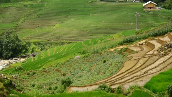 Thumbnail for Rice Terraces In Green Valley -  Sapa Vietnam