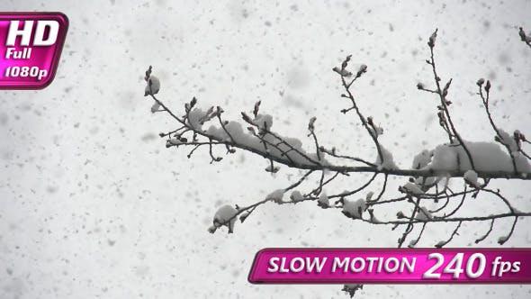 Thumbnail for Januar Schnee Zyklon