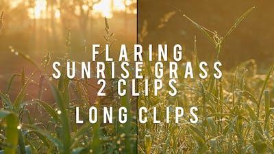 Flaring Grass