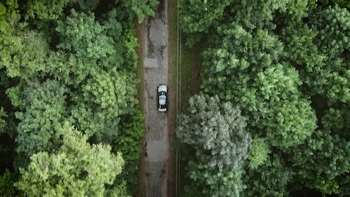 Aerial View of a vehicle on road leading trough beautiful colorful forest