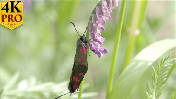 Un papillon noir tacheté rouge à suspendre