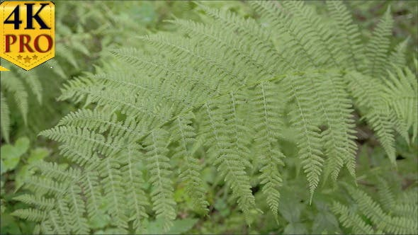 Lots Green Ferns on the Meadows
