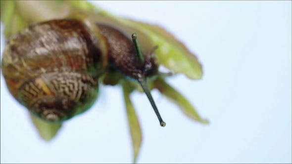 Thumbnail for View of the Snail