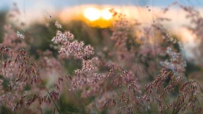 Grass And Sunshine