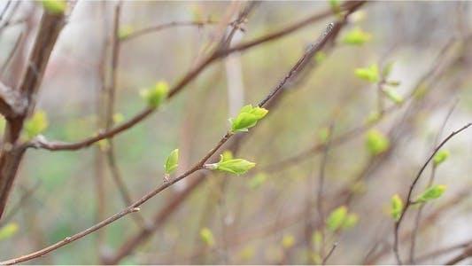 Thumbnail for Tree 3